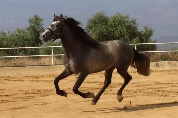 Arquero05may18 (1024x768)